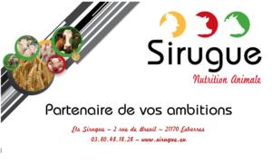 Sirugue